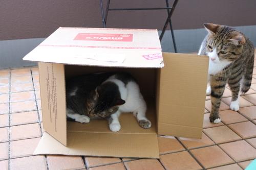 箱ふたり4