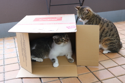 箱ふたり5