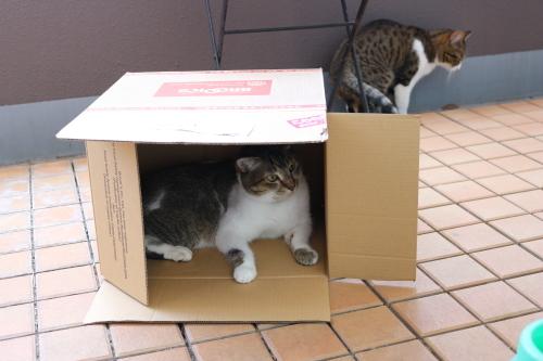 箱ふたり6