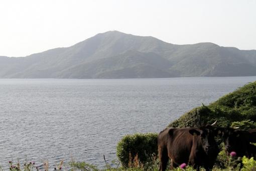焼火山と牛