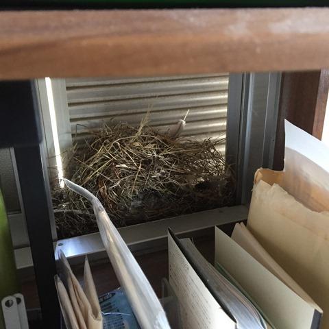 スズメの巣