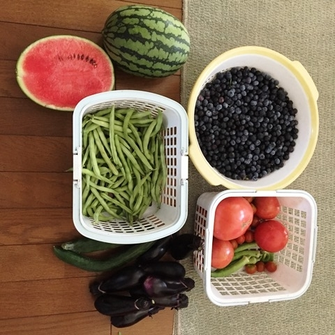 今日の収穫:沢山です