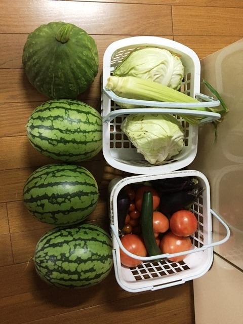 今日の収穫トウモロコシカボチャ