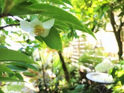 KONOHA6月の庭 (5)