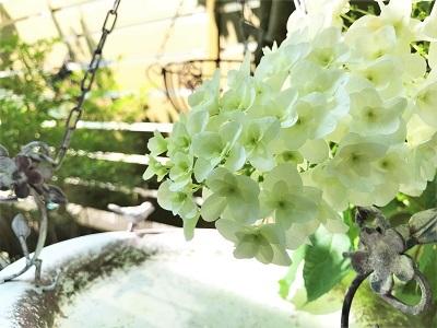 KONOHA6月の庭 (6)