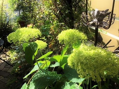 KONOHA6月の庭 (7)