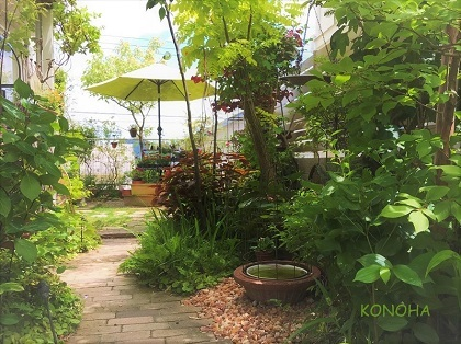 KONOHA6月の庭 (9)