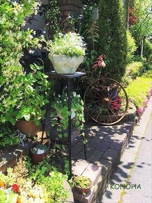 KONOHA6月の庭