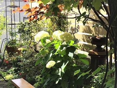 KONOHA紫陽花の季節 (2)