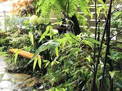 KONOHAの庭 (1)