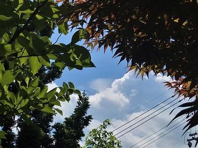 夏空 (2)