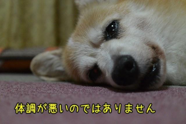 a-DSC_9628.jpg