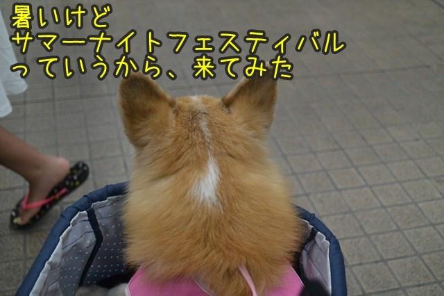 a-DSC_9728.jpg
