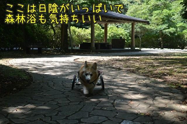 a-DSC_9761.jpg