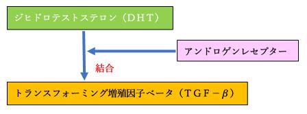 TGFーβの生成