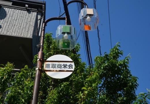 180522-142224-横須賀STORY 鷹取山異径 (389)_R