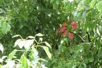 保福センターそばの樹