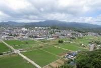 6月29日の田んぼと大山