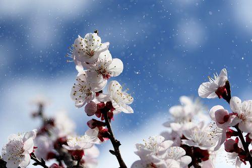 flowers-4071571_960_720.jpg