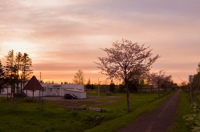 浅茅野の桜並木