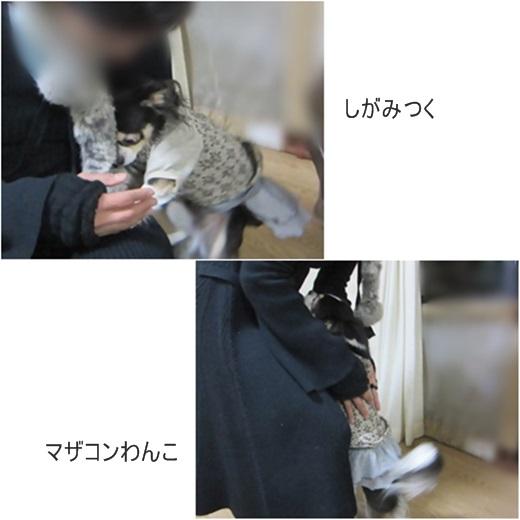 catsマザコン