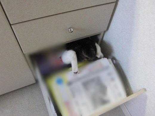 IMG_0592 2012秋 (197)