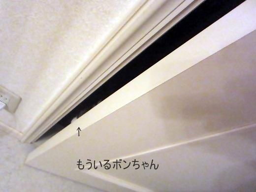 IMG_2035.jpg