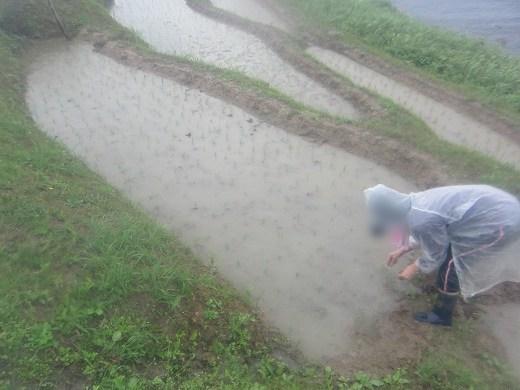輪島白米千枚田 雨の田植え