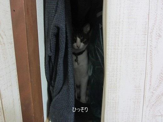 IMG_7249r.jpg