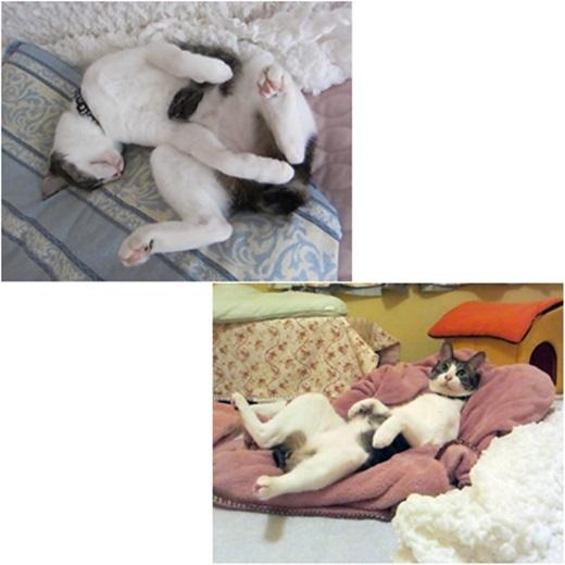 cats1_20180717191037741.jpg