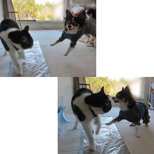 cats1_201808071748104a8.jpg
