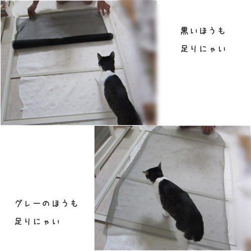 cats_201510171922023ac_20180727191303985.jpg