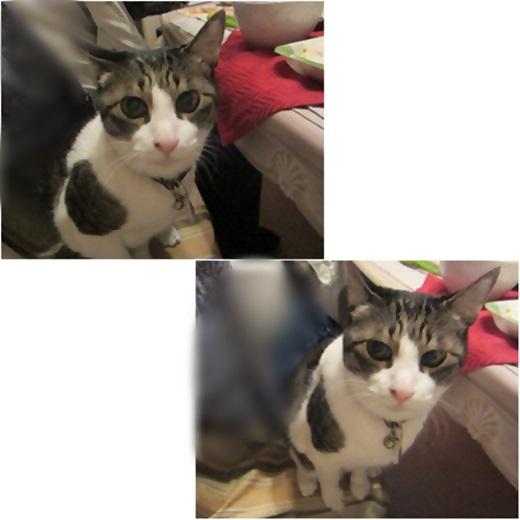 cats_20180507224201cf7.jpg