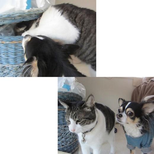 cats_20180807174620182.jpg