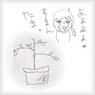 tamasuman.jpg