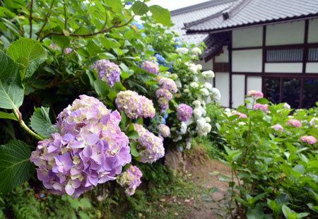 ☆DSC_3697