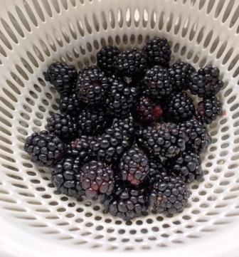 18brackberry0704_3920.jpg