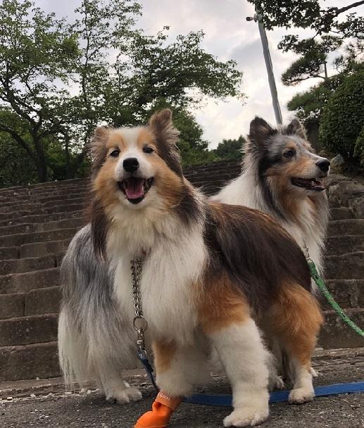 散歩お寺2