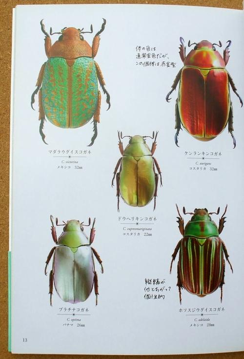 きらめく甲虫 02