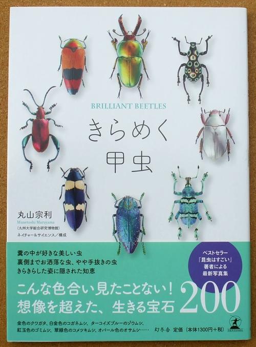 きらめく甲虫 01