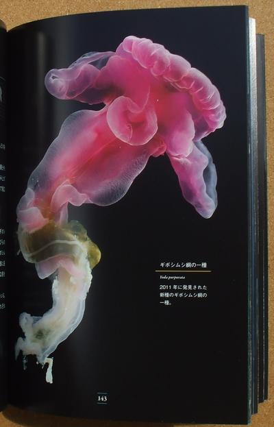 深海生物大事典 02
