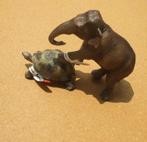 シュライヒ ゾウガメ+インドゾウ