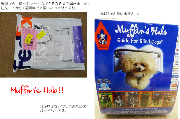 01blind dog harnessが届いたよ