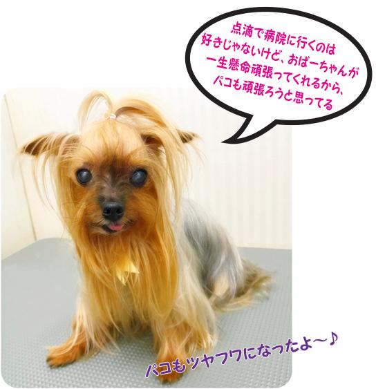 blog999897arrs.jpg