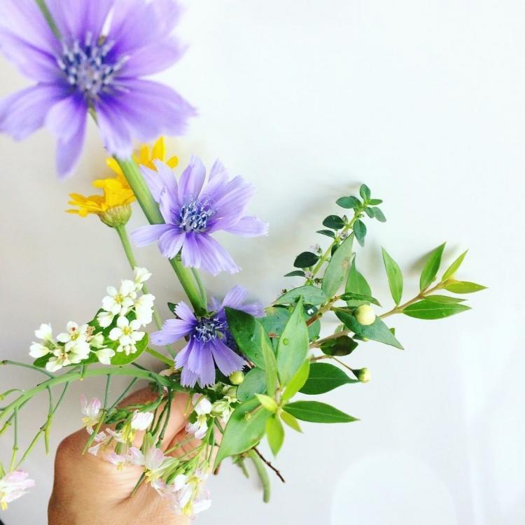 180609/ベランダの花