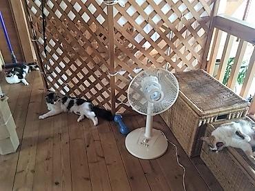 扇風機あたれば?