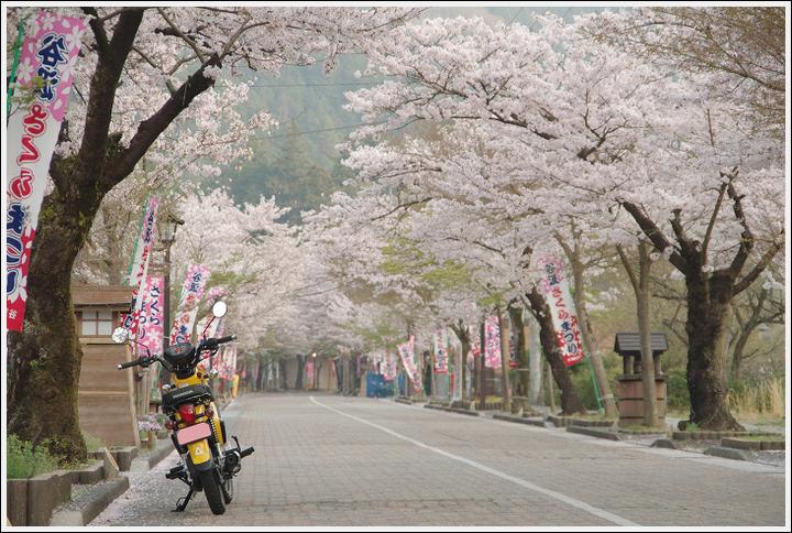 2018年4月3日 岐阜・滋賀の桜ツーリング (1)
