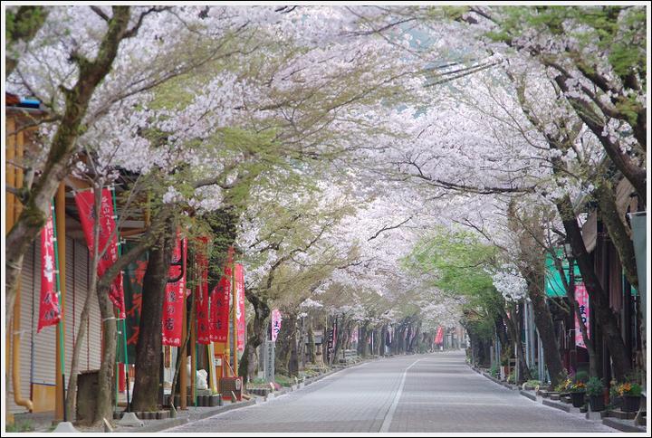 2018年4月3日 岐阜・滋賀の桜ツーリング (3)