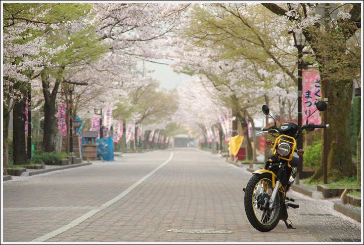 2018年4月3日 岐阜・滋賀の桜ツーリング (4)