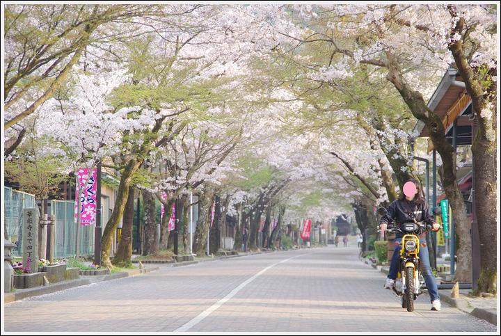 2018年4月3日 岐阜・滋賀の桜ツーリング (6)